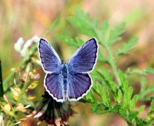 Karner Blue Butterfly Walk @ Wilton Wildlife Preserve & Park |  |  |